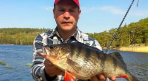 Gro�er Barsch gefangen beim Angeln in Schweden vom Steg unsere Schweden Ferienhauses am See.