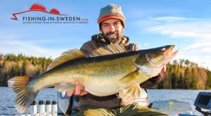 Zander Angeln in Schweden am Stora Nätaren