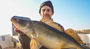 Zander caught in Norra Bunn when zander fishing in Sweden.