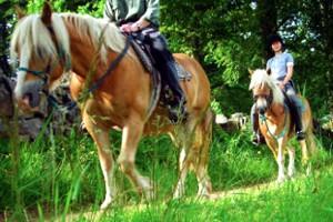 Reiten, Pferde und Reiterhöfe in Jönköping und Smaland, Schweden