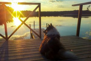 Urlaub mit Hund in Schweden in unserem grauen Ferienhaus am See (Haus 1)!